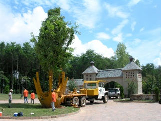 Tree Moving by Toms Creek Nursery & Landscaping